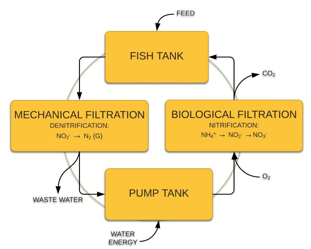 Recirculating Aquaculture System Flow Chart