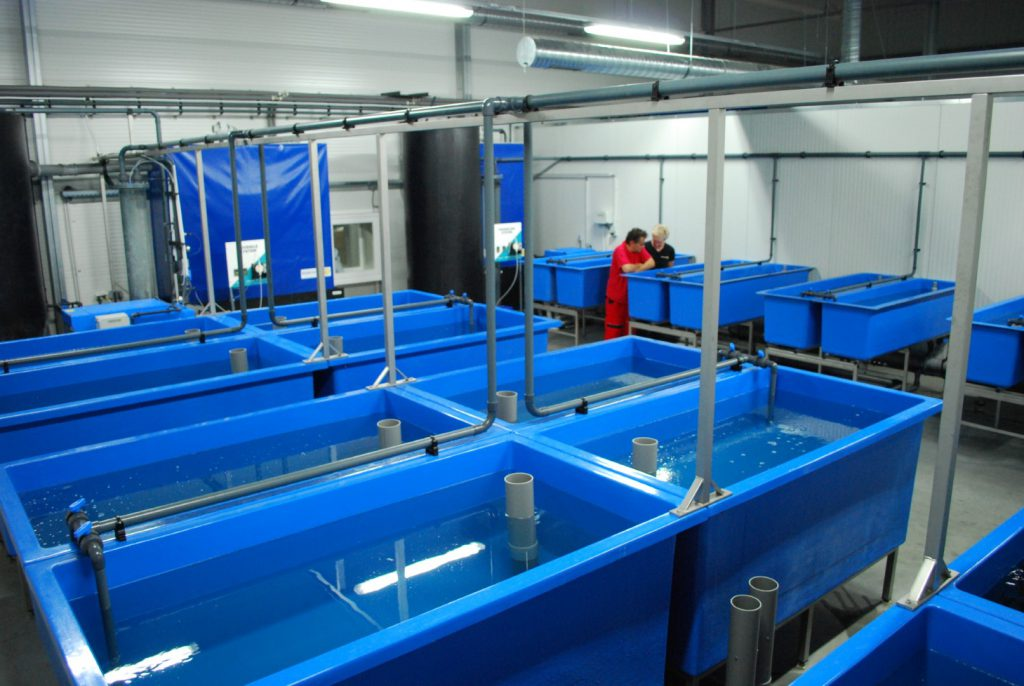 African catfish hatchery for Agro Rybia Farma